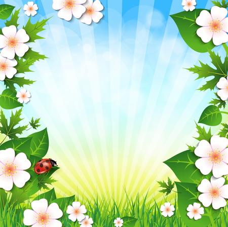 grass flowers: Summer background. Grass, flowers, sky.