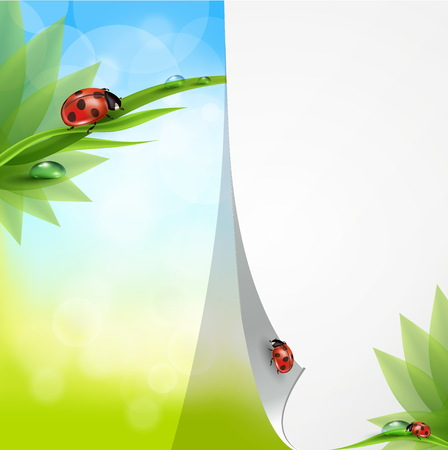 green butterfly: Spring background with flowers, grass and a ladybug. Vector.