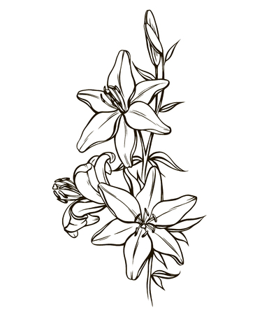 beautiful lily in the style of black and white. Many similarities in the profile of the artist Illustration