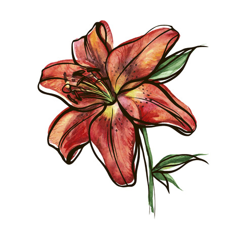 Colorful watercolor texture vector botanic garden flower red tiger lily Illustration