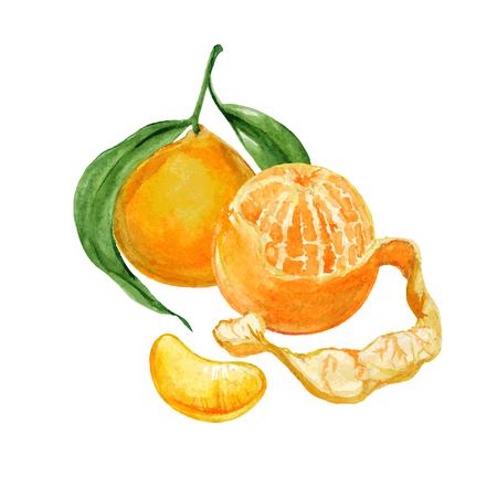 entières et tranche pelées mandarines ou mandarines isolé sur fond blanc. illustration vectorielle réaliste