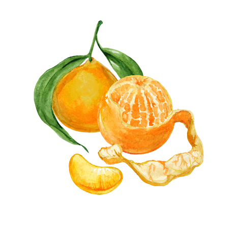 Whole and slice peeled mandarins or tangerines isolated on white background. Realistic vector illustration.
