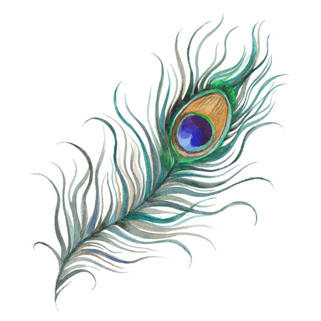 Hand painted watercolor peacock feather closeup isolated on white background. Art scrapbook element, hand drawn.