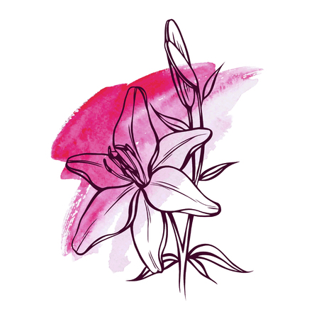 flower and bud lily for design, vector illustration