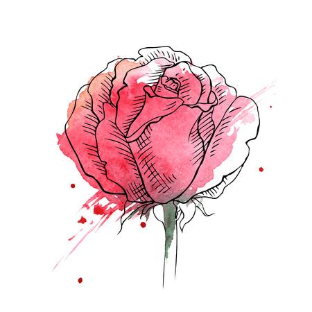 fiore, rose rosse, illustrazione disegnata a mano.