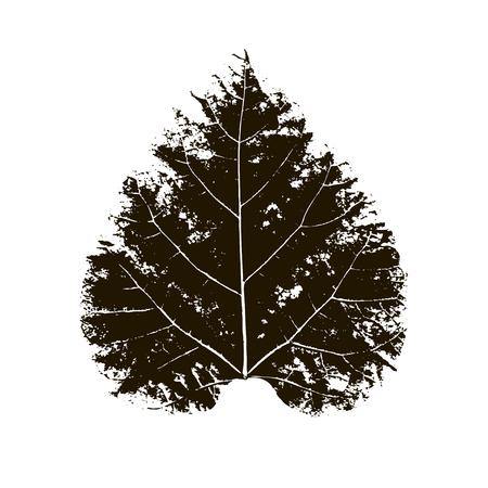 Impresión de hoja de abedul de vector de árbol de abedul. Hojas de los árboles impresas en tinta sobre papel. Imagen vectorial trazada.