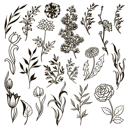 Collection of hand drawn flowers and plants. Monochrome vector illustrations in sketch style.