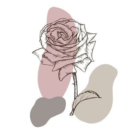 Black and white rose flower with leaves and stem. Realistic vector illustration of open rose bud. Decorative element for tattoo, greeting card, wedding invitation. Hand drawn sketch. Illustration