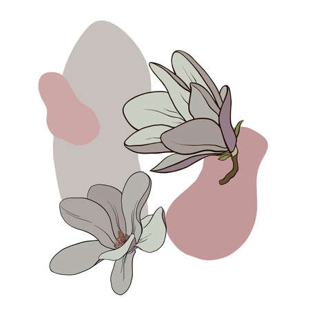 Color drawing of a branch of magnolia with flowers and leaves. Vector isolated on background. Illustration