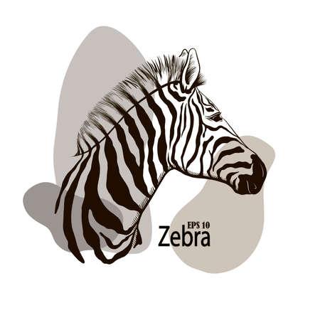 black and white zebra beautiful animal pattern