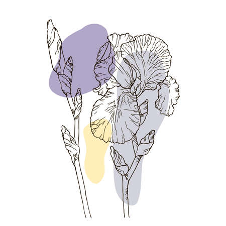 Sketch iris flowers, hand drawn, ink style, black and white line illustration