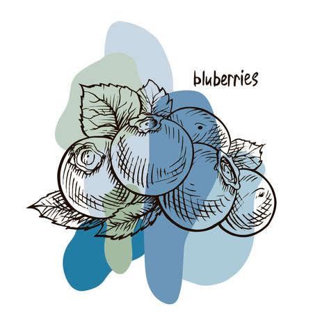 Blueberries. Hand drawn illustration. Wild berries set. Vector Illustratie