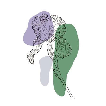 Hand-drawn iris set in vector Illustration