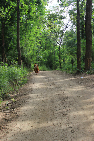 monk walking in the forest in Maetala Valley.