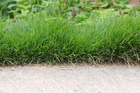 wayside: There are grass growing through wayside