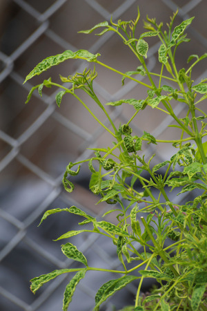 The plants are growing near the net fence Stock Photo - 30799519