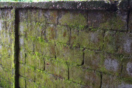 There is the green wall by algae  Stock fotó