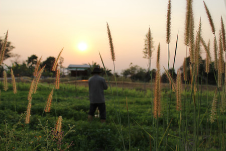 eventide: The man woorking in the plantfield in the evening