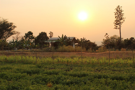 eventide: It s the vegetable garden in the sunset