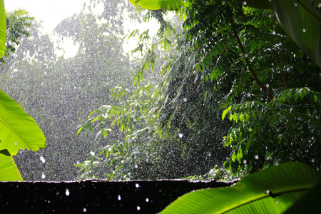 disseminate: Today it is the raining.Drops on the trees and wet all around.