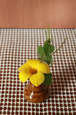 decorate: The allamanda cathartica is in the small vase to decorate the dinner table. Stock Photo