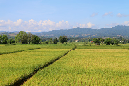 There is the ridge in the paddy field.Used for barrier water.