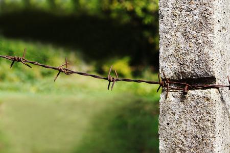 cattle wire: barbed wire involve concrete pole. Stock Photo