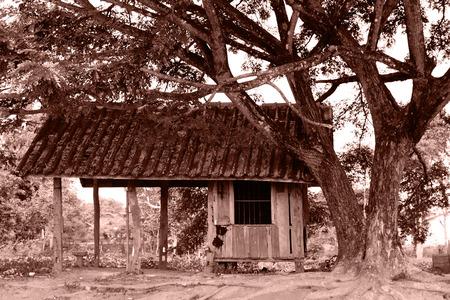 old hut under the tree. Banco de Imagens
