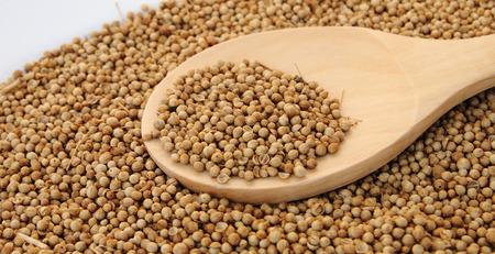 constrain: Coriander seed in wooden spoon