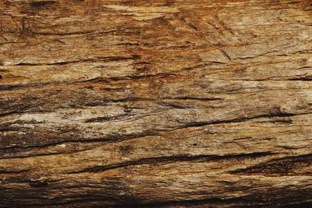 decorate: surface of brown log use for decorate flower garden Stock Photo