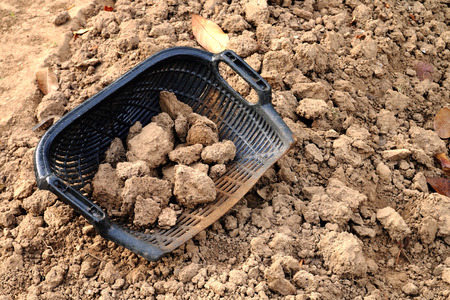 shaped: clam-shell shaped basket with soil on the plot