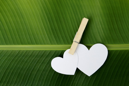 two paper heart pinch by clip on fresh banana leaf photo