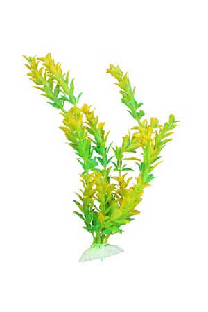 artificial yellow and green color marine plant ,isoalted white background with clipping path