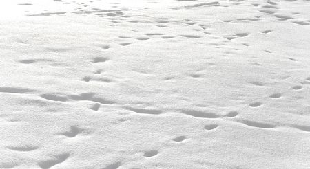 Foot prints in snow Stock Photo - 6285836