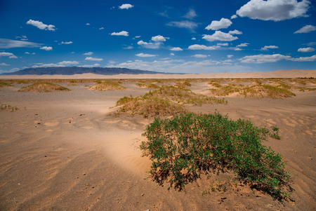 Mongolia. The famous sand dunes of Hongoryn-Els are located in the North-East of the Gobi desert. Length of 120 km with a width of 3-5 km dunes reach a height of 300 m.