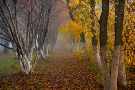 Russia. The South Of Western Siberia. Early foggy morning in the city park