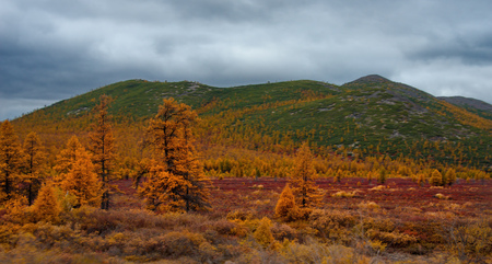 Russia. Magadan region. Autumn shore of taiga lake on permafrost.
