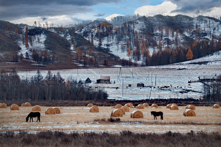 Russia. The South Of Western Siberia. Free pastures in the valleys of the Altai Mountains