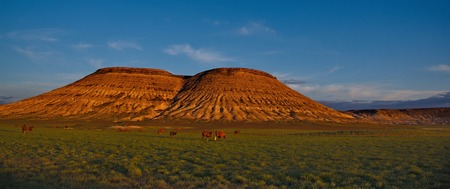 Late spring in the steppes of Western Kazakhstan