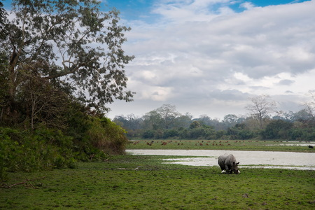 East India. Inhabitants of Kaziranga National Park. White rhino