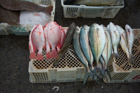 Gifts of the Equatorial sea. Malaysia. island of Borneo. Freshly caught fish and seafood at the fish market in Sandakan. 스톡 콘텐츠