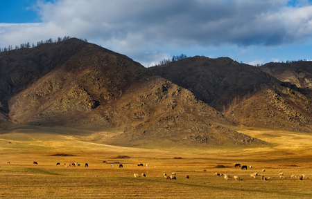 Russia. Horses on the Altai Mountains 免版税图像