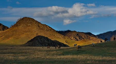 Russia. Horses on the Altai Mountains Zdjęcie Seryjne