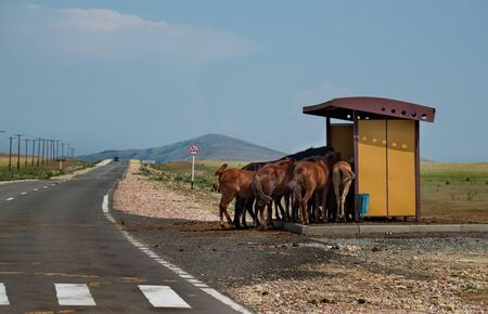 Eastern Kazakhstan. Escaping from the unbearable heat, the horses hid under the canopy of the bus stop.