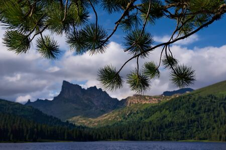 The cedar of the mountain lake. Russia. Western Sayan mountains, South of Krasnoyarsk territory. Lake Light in the natural Park Ergaki (translated from Turkic - Fingers).