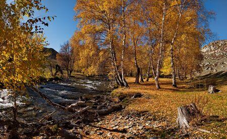 Late autumn on mountain rivers of Altai. Russia. Mountain Altai. River Big Ilgumen near the village Kupchegen