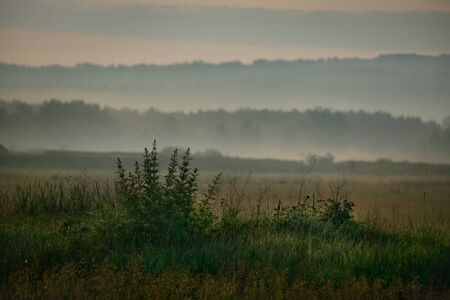 Russia. Republic Of Khakassia. Fog in the early summer morning in the fields near the city of Abakan.