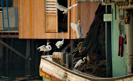 Malaysia Semporna fish market. The white Heron watches for fish lost or discarded by sellers.