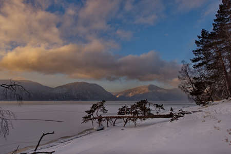 Russia. mountain Altai. A tree hanging over the snow-covered shore of lake Teletskoye near the village of Yaylyu. 版權商用圖片