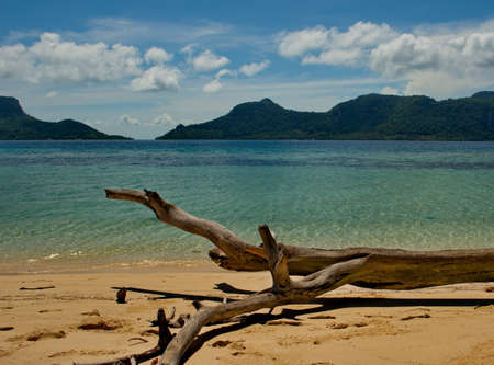 Borneo. Malaysia. A picturesque snag on the seashore of one of the many reef Islands along the East coast of Borneo.